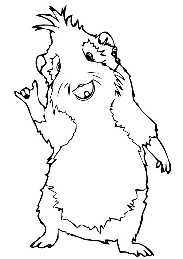 guinea pig coloring page # 20