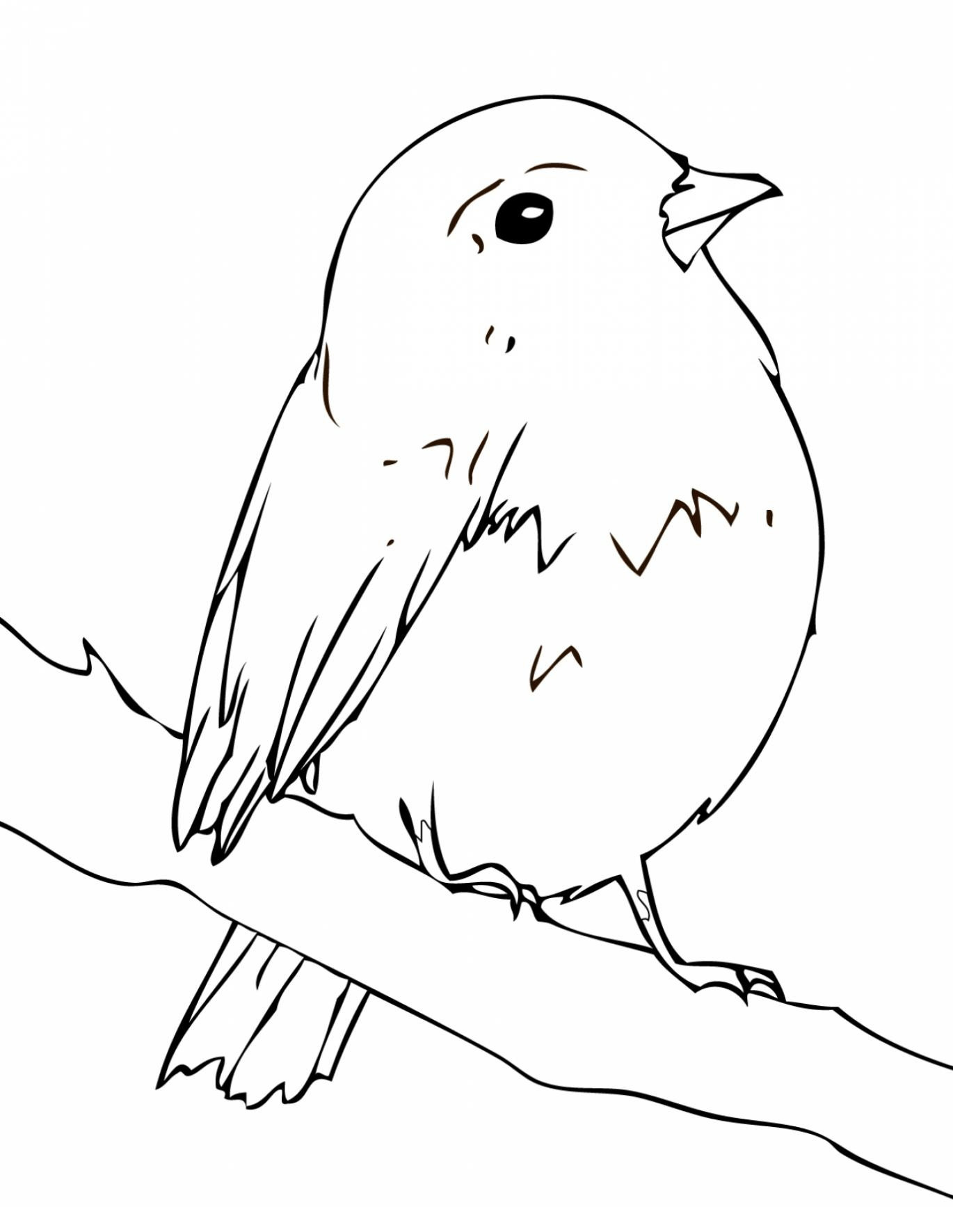 Robin Coloring Pages Best Coloring Pages For Kids