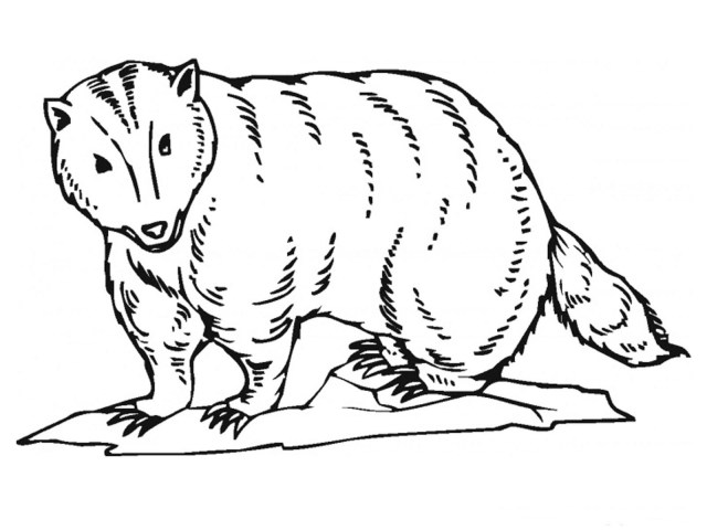 Badger Coloring Pages - Best Coloring Pages For Kids