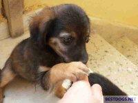 Exposed puppy on Crete.