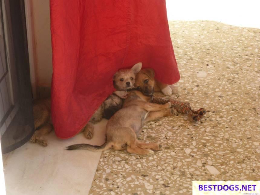 Malia Puppies