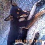 Road accident dog