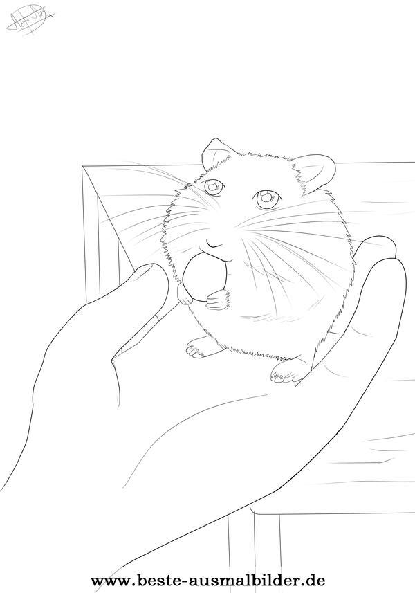 Hamster Ausmalbild Ausmalbilder Von Haustieren Kostenlos