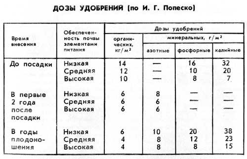 malina_iaroslav_12.jpg