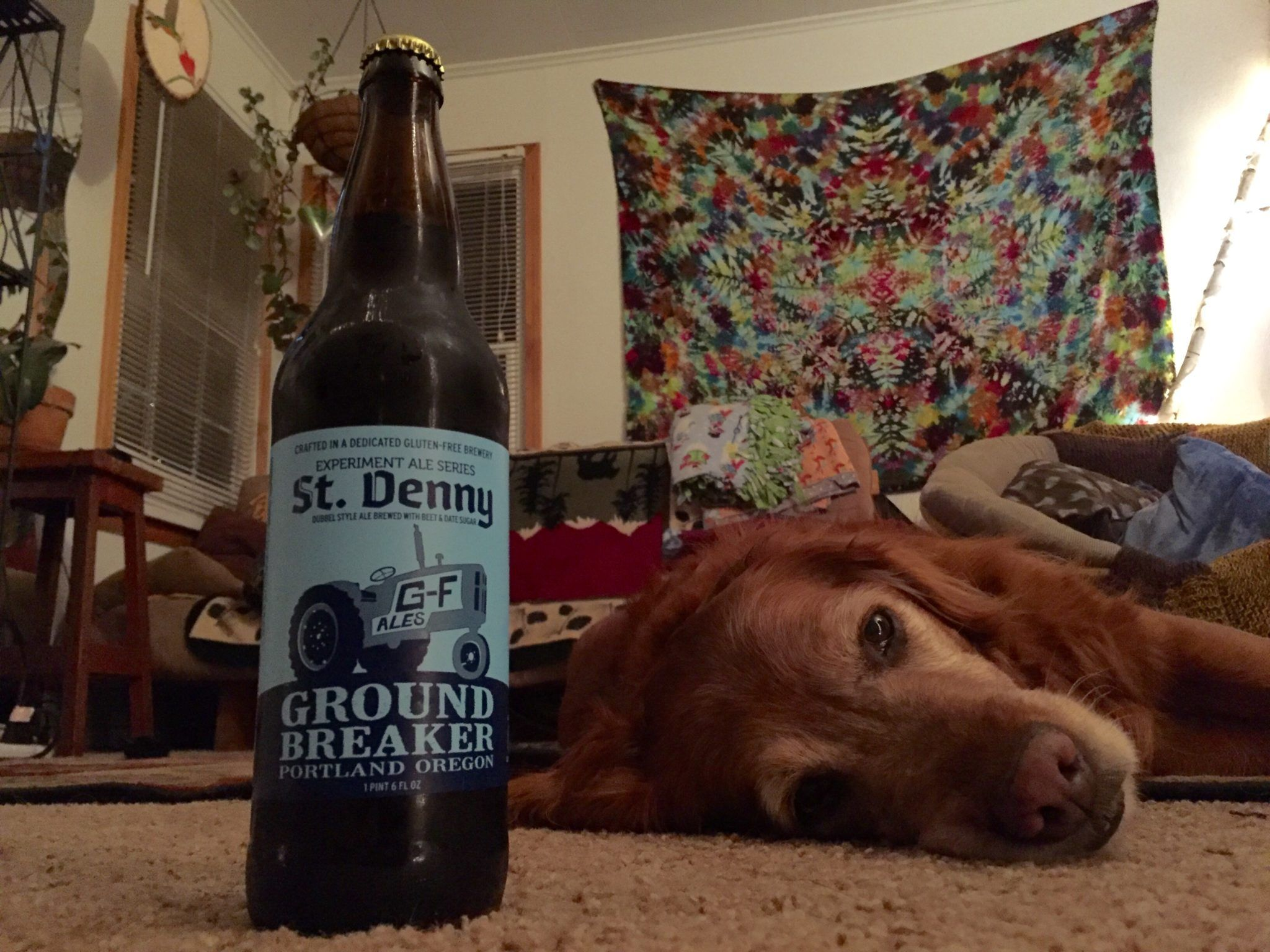 ground breaker dubbel style ale ground breaker brewing company gluten free beer review st denny's belgian ale beet date sugar seasonal brew