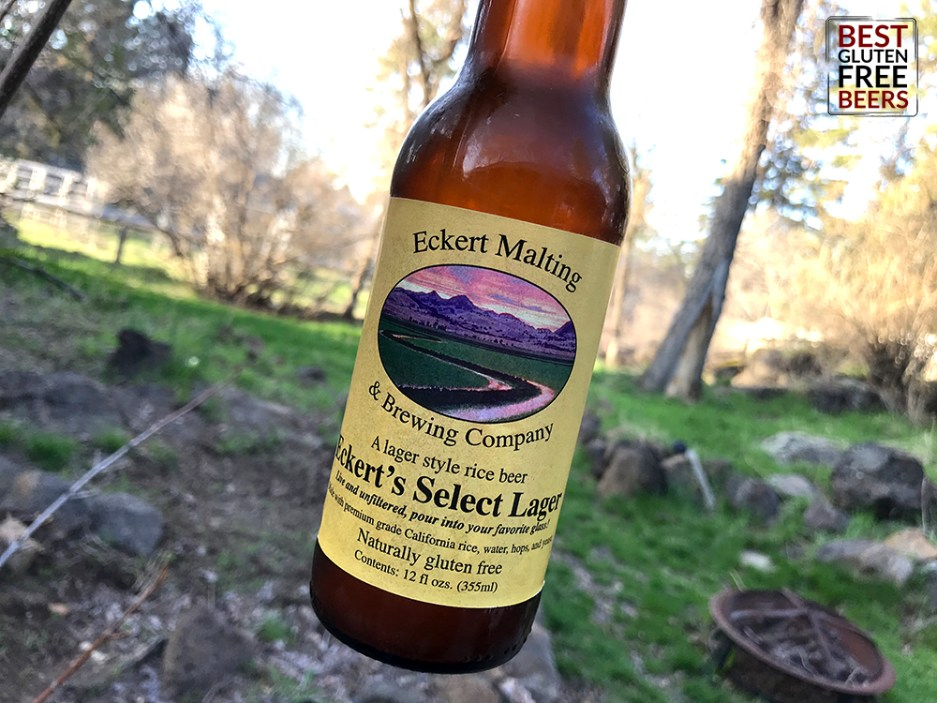 Eckert Select Lager gluten free beer review