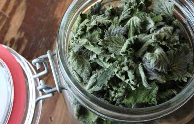 stinging nettle benefits
