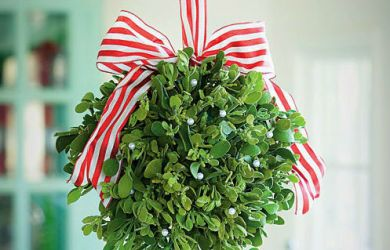 White Mistletoe - Christmas Decoration and Cure for Cancer