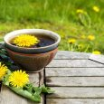 dandelion root tea photo
