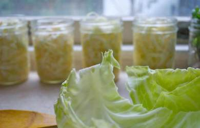 Homemade Probiotic Drink Prepared from Cabbage