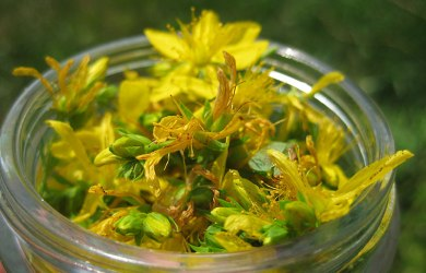 St. John's Wort for Anxiety