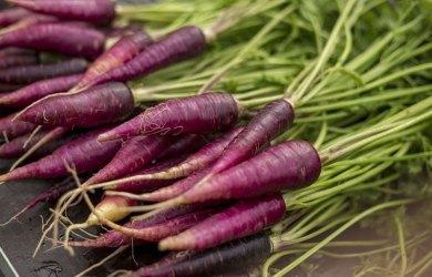 purple carrot benefits nutrition