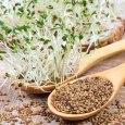 alfalfa benefits