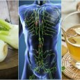 5 Plant-based Solutions to Cleanse Your Lymphatic System