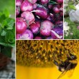 Natural Remedies for Pollen Allergies