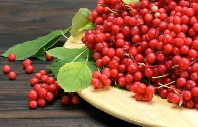 Benefits of Schisandra Berries