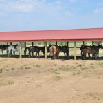 Diy Horse Run In Shelters Easy Set Up For Horse Shelter