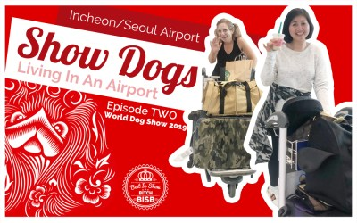 Living in an Airport with Show Dogs – Episode TWO