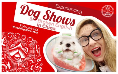 Dog Shows and Broken English – Episode SIX