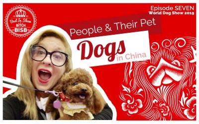 People and their Pets & Dogs in China – Episode SEVEN