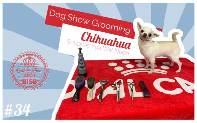 Dog Show Grooming: Chihuahuas EPISODE ONE