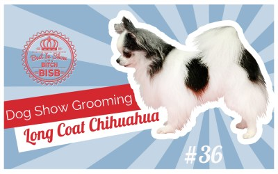 Dog Show Grooming: Long Coat Chihuahua PART TWO