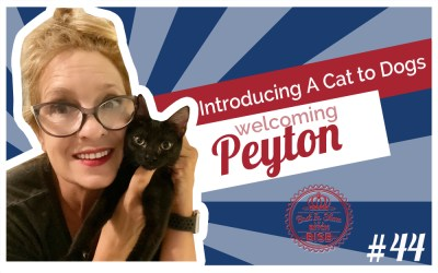 Welcoming Peyton – Introducing A Cat to Chihuahuas