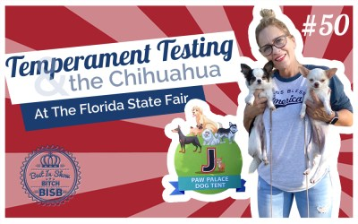 Temperament Testing and the Chihuahua