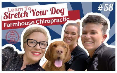 Learn How To Stretch Your Dog with Farmhouse Chiropractic