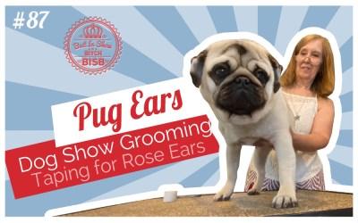 Dog Show Grooming: How To Tape Pug Ears