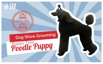 Dog Show Grooming: How to Groom a Poodle Puppy
