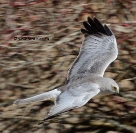 Les Oiseaux De Proie