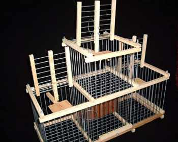 Trap Cage With For 3 Trap Birds