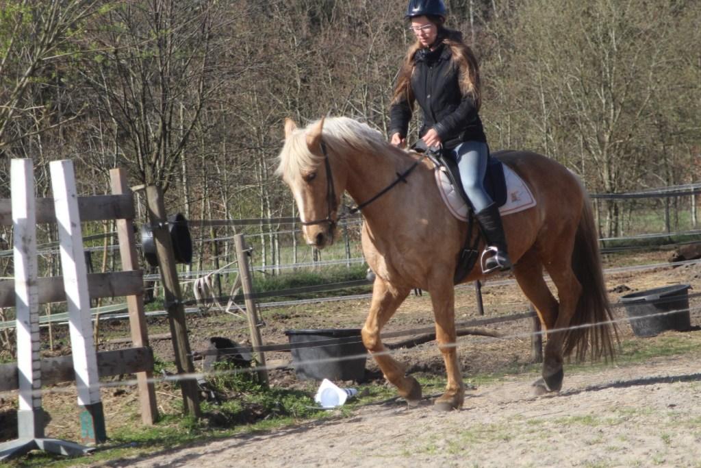 Stage paardenhouderij en paardensport natural horsemanship