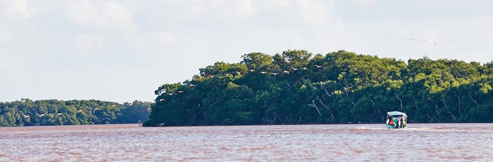 Reserve-Celestun-Mexique