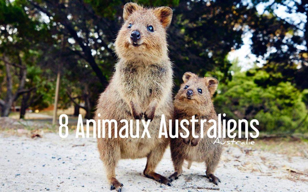 8 animaux que vous ne croiserez qu'en Australie!