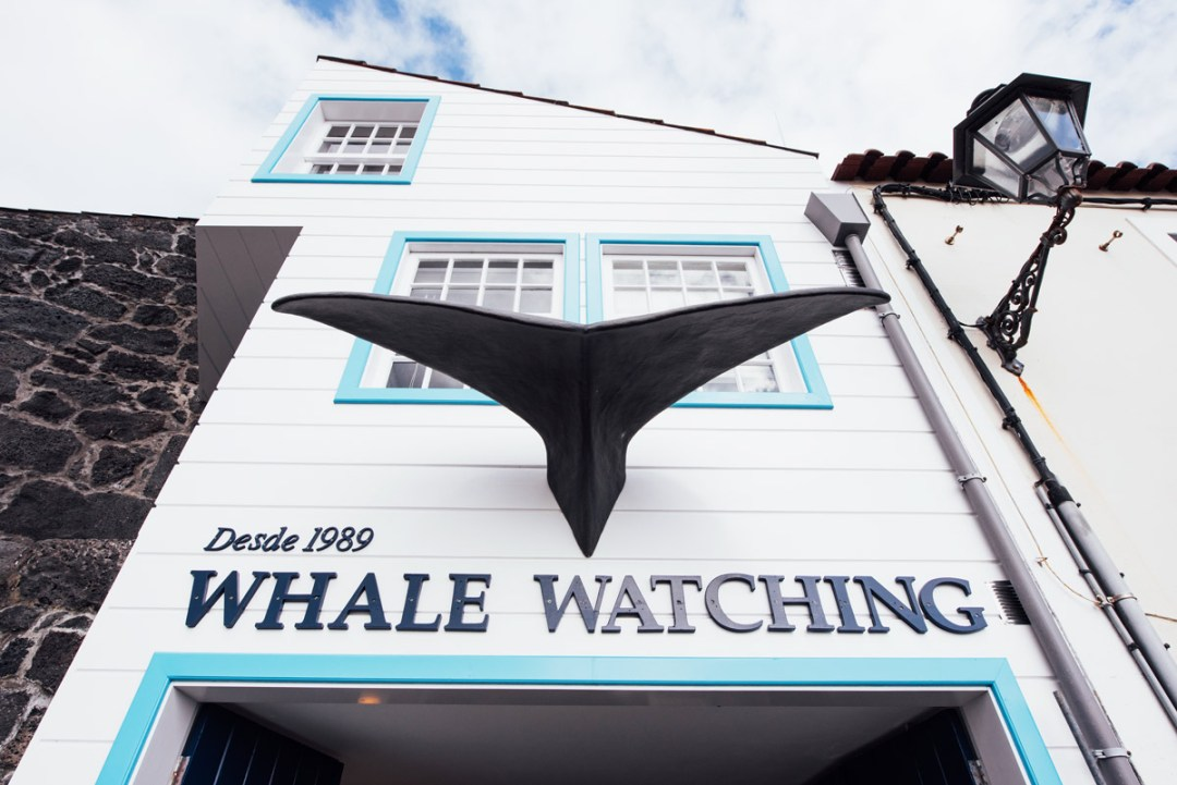 Whale-Wtaching-Acores-Pico