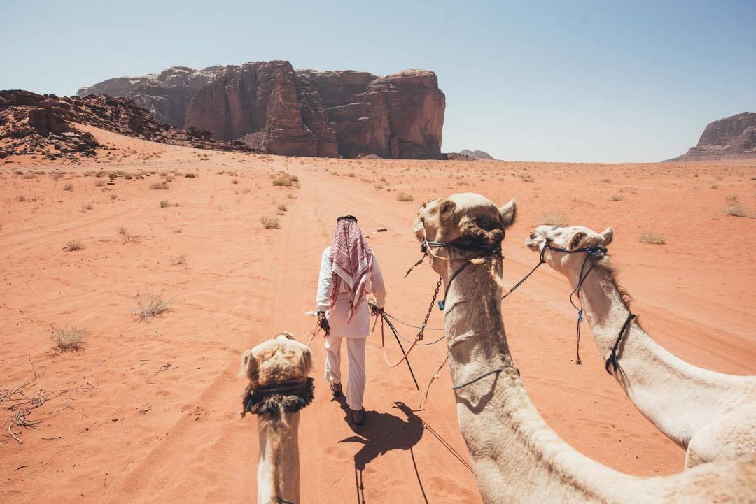 ou faire du chameau wadi rum