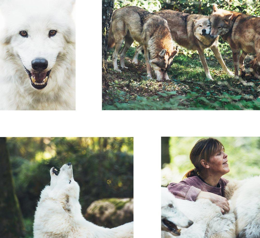ou voir des loups en allemagne