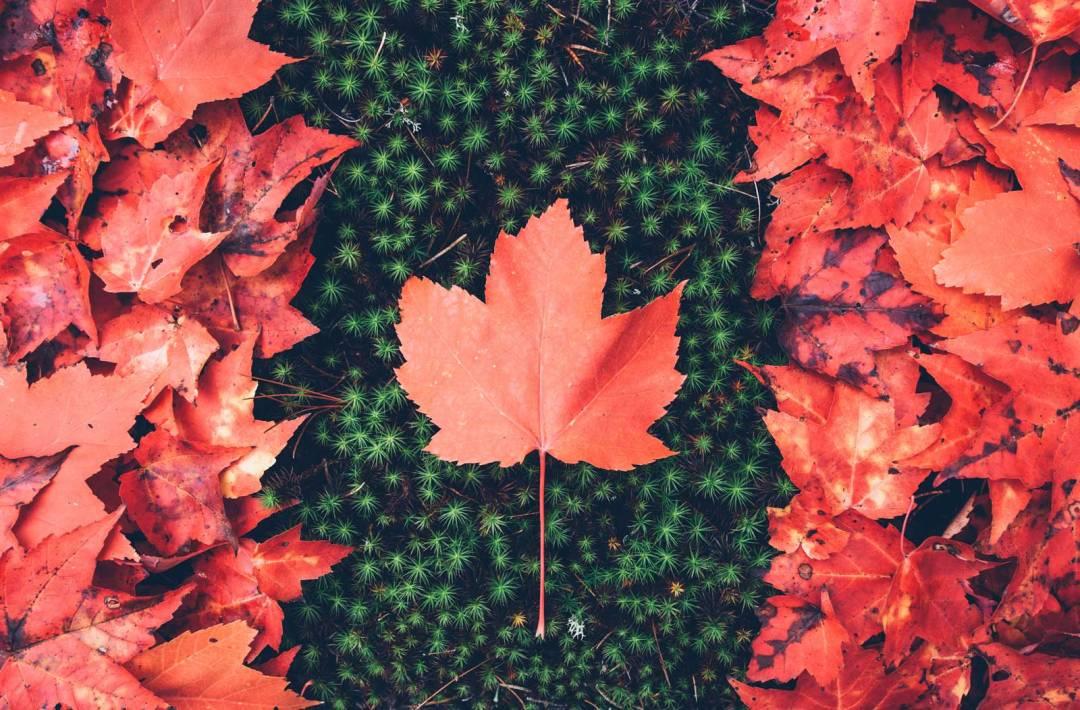 automne en ontario