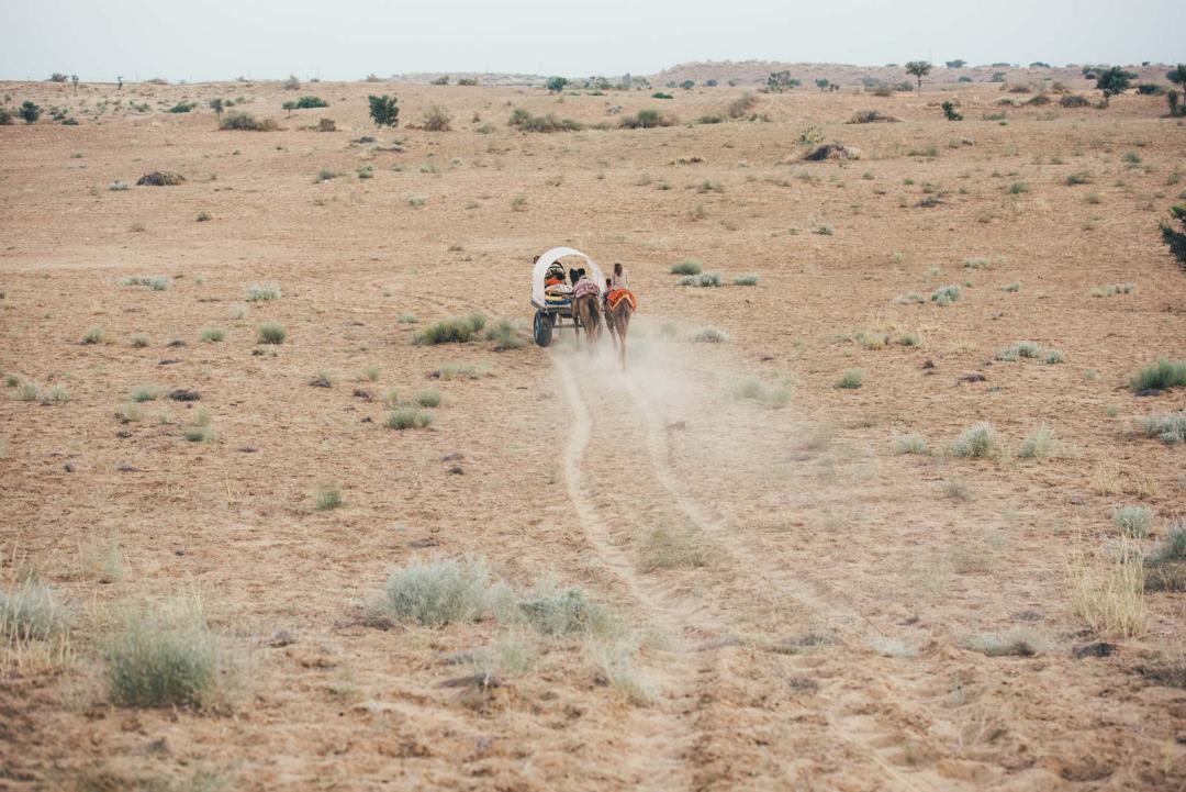 quel safari dans le desert du thar choisir?