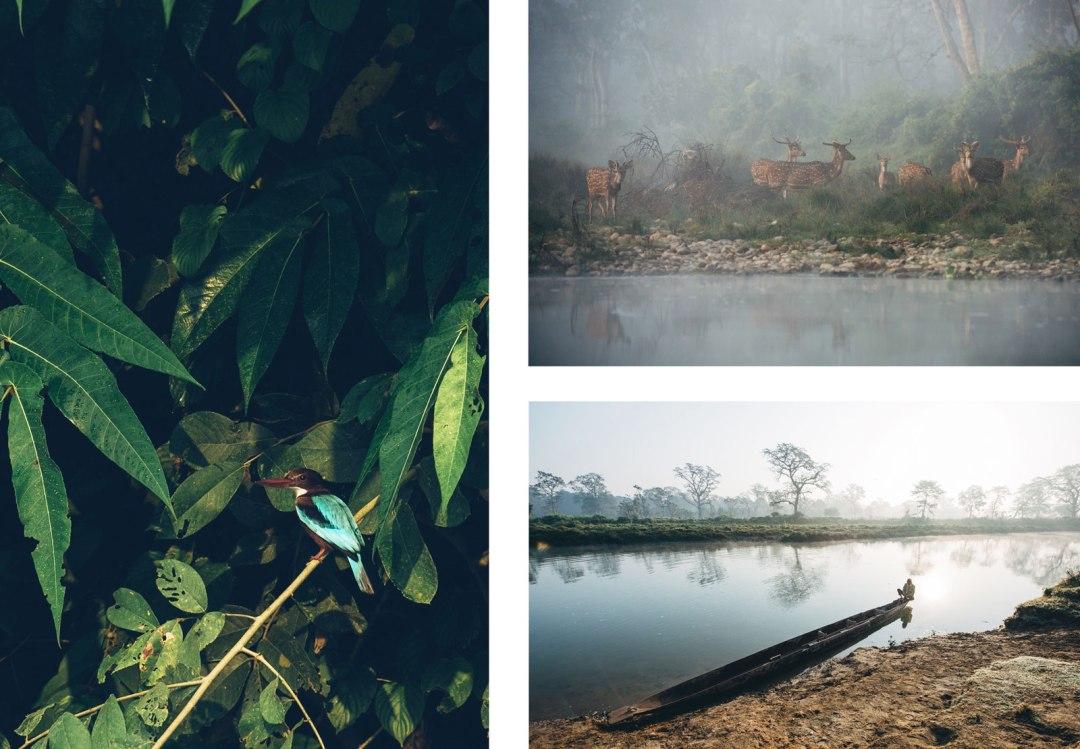 parc national de chitwan népal que voir