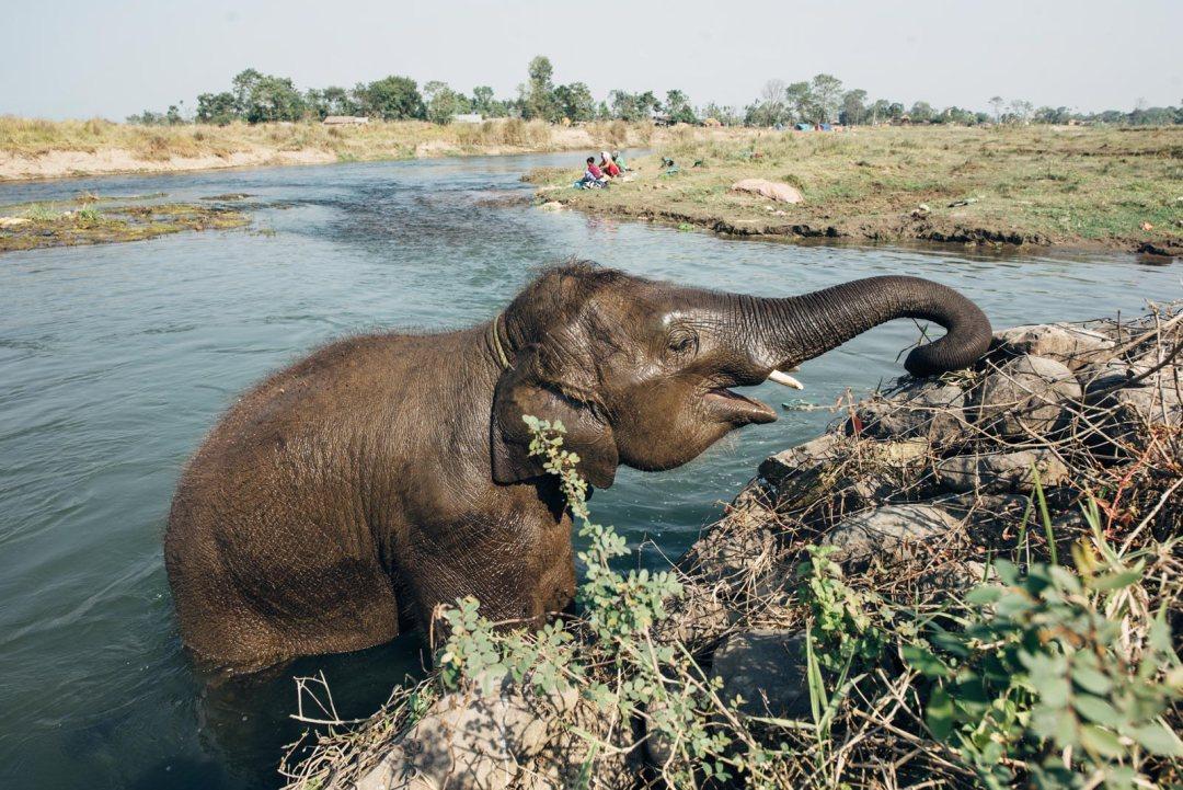 ou voir des elephants au nepal