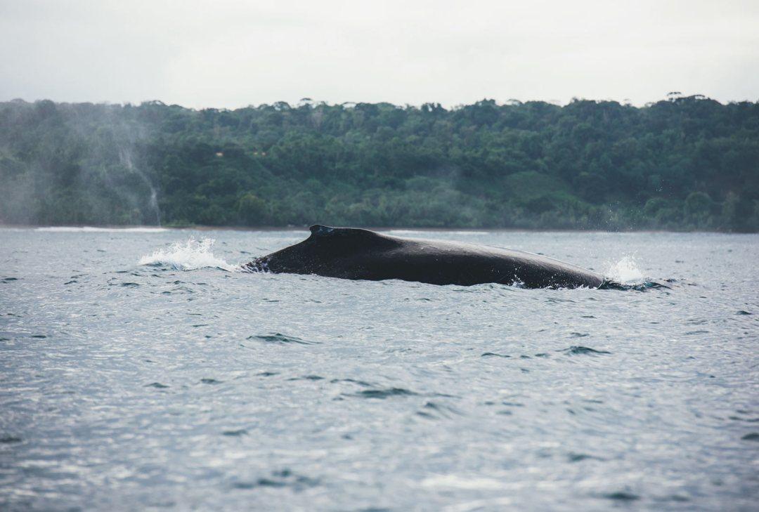 ou voir des baleines costa rica