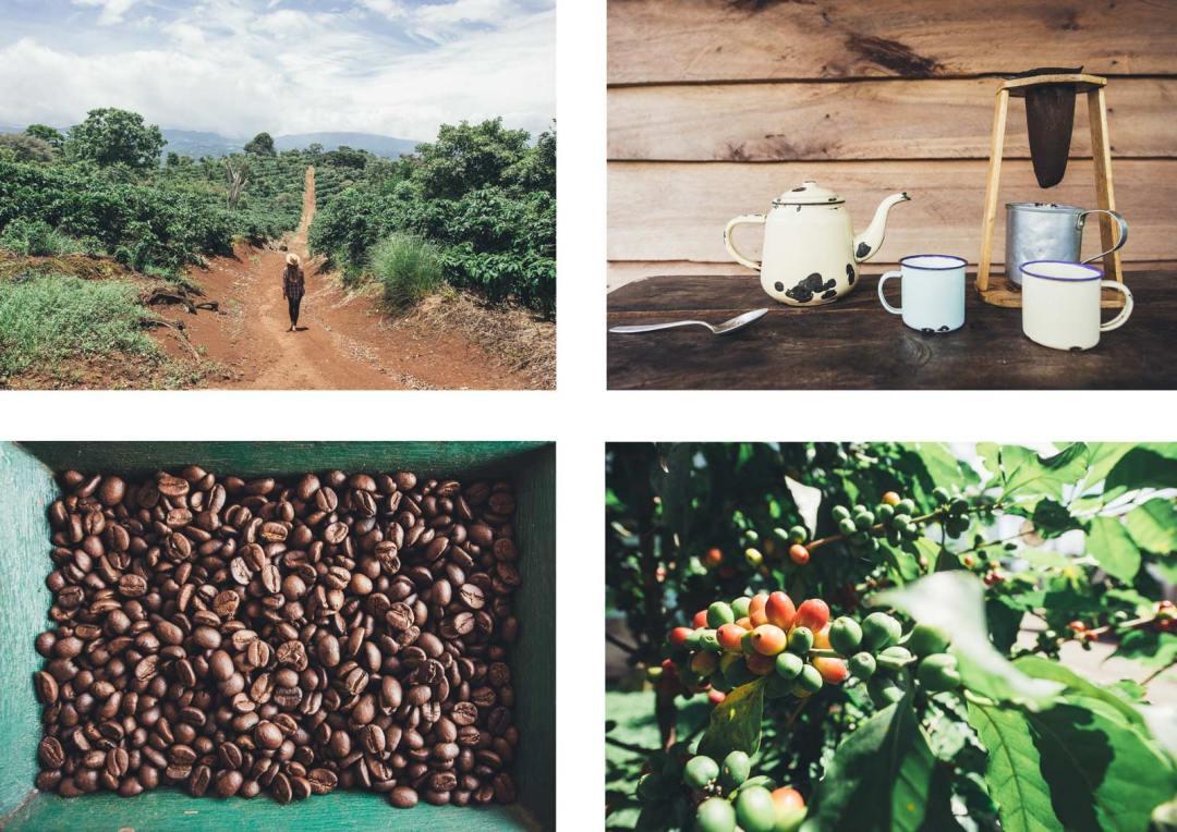 plantation de café costa rica