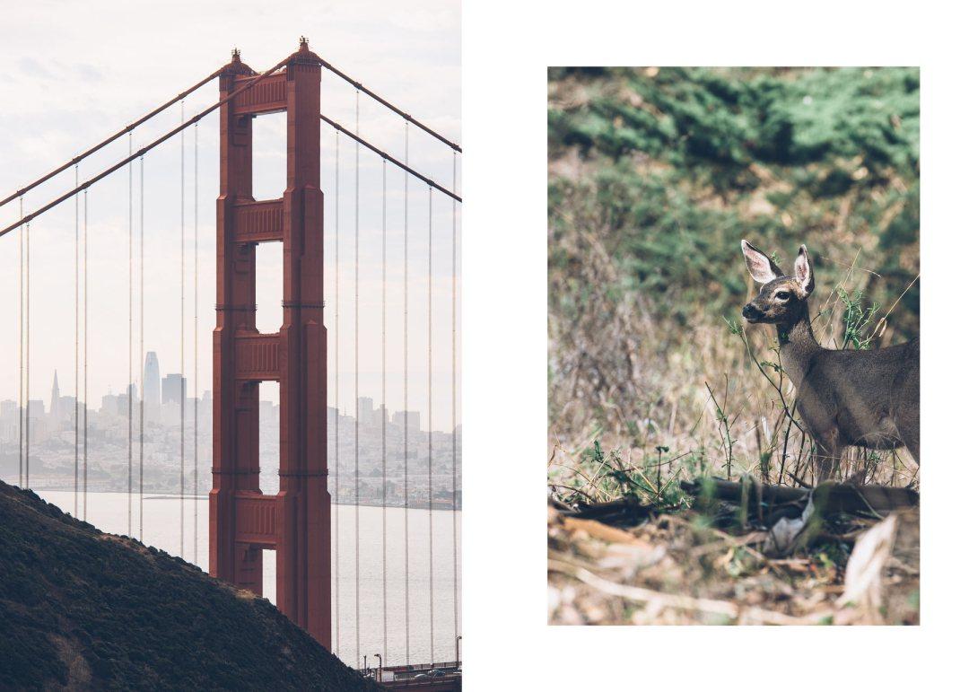 Voir des biches à San Francisco près du Golden Gate!