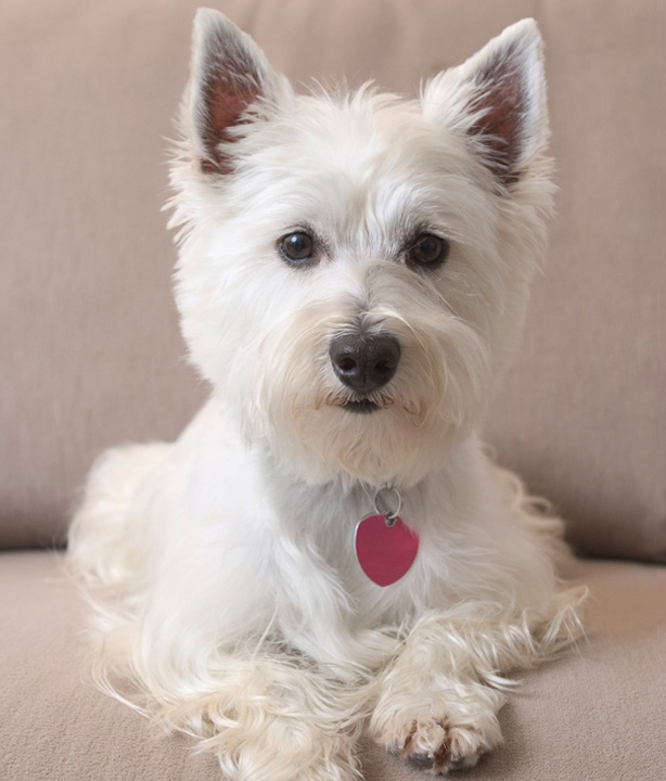 Small Dog Breeds That Dont Shed Best Large Breed Puppy