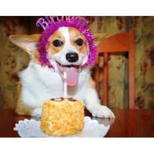Mutable Garlic Dog Garlic Dog By Boom Meme Center Happy