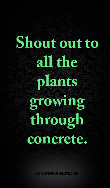 Shout out to all the plants growing through concrete.