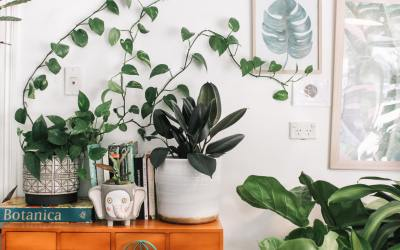 Top 5 plants you would want in your home and why